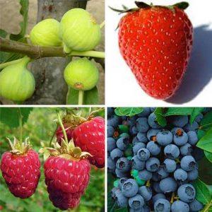 Bogyós gyümölcsök
