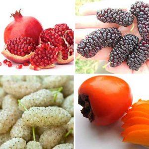 Különleges télálló gyümölcsfák